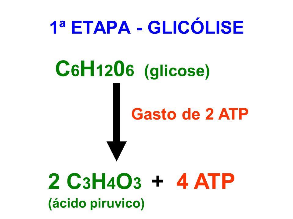 C 6 H 12 0 6 (glicose) Gasto de 2 ATP 2 C 3 H 4 O 3 + 4 ATP (ácido piruvico) 1ª ETAPA - GLICÓLISE