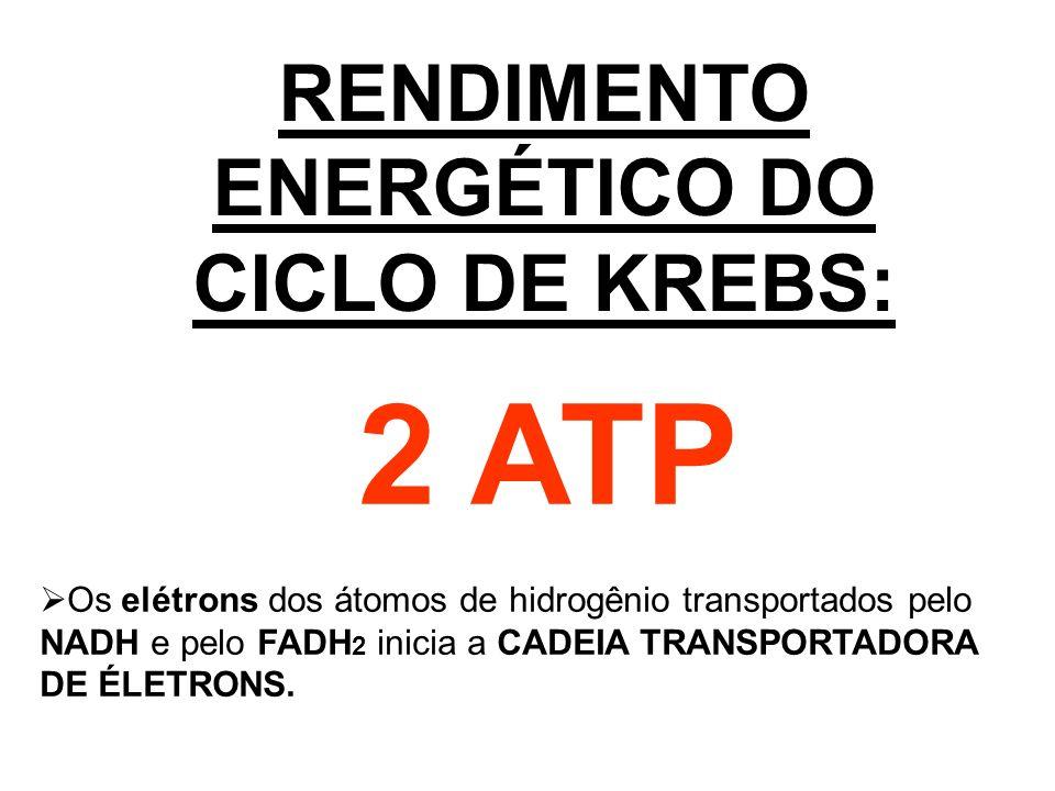 RENDIMENTO ENERGÉTICO DO CICLO DE KREBS: 2 ATP Os elétrons dos átomos de hidrogênio transportados pelo NADH e pelo FADH 2 inicia a CADEIA TRANSPORTADO