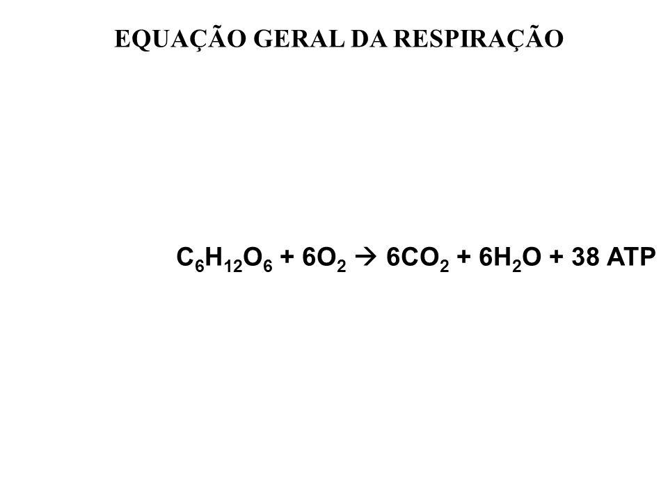 EQUAÇÃO GERAL DA RESPIRAÇÃO C 6 H 12 O 6 + 6O 2 6CO 2 + 6H 2 O + 38 ATP