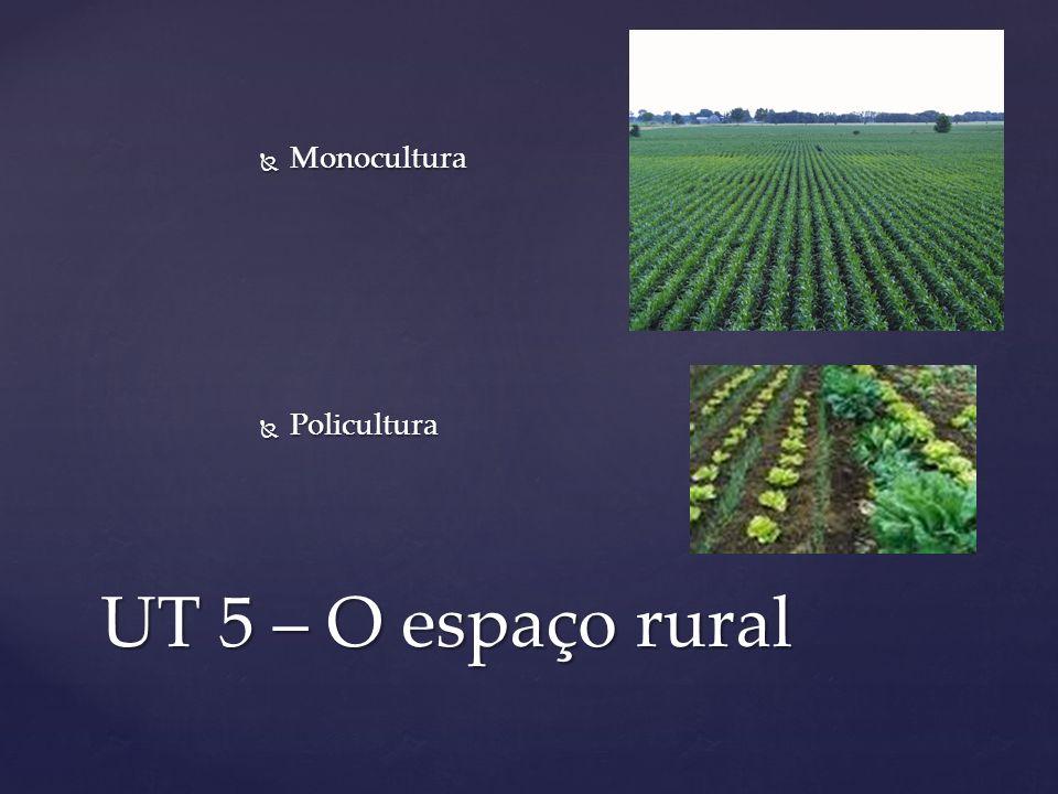 UT 5 – O espaço rural Monocultura Monocultura Policultura Policultura