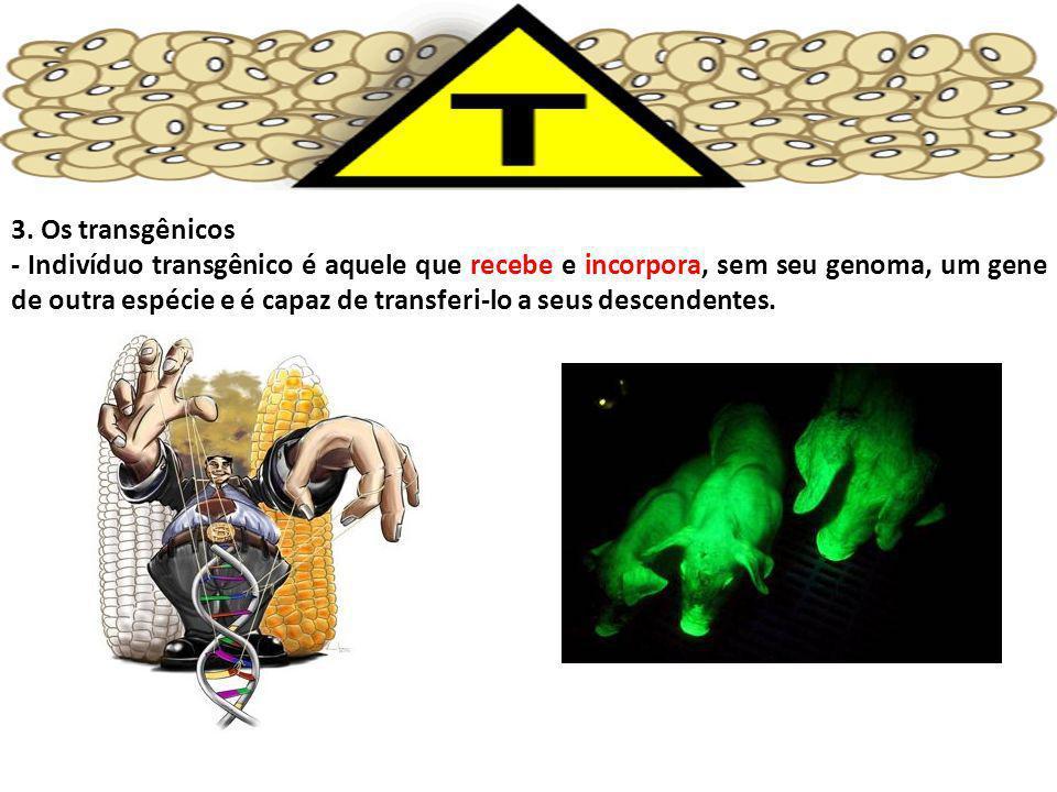 3. Os transgênicos - Indivíduo transgênico é aquele que recebe e incorpora, sem seu genoma, um gene de outra espécie e é capaz de transferi-lo a seus