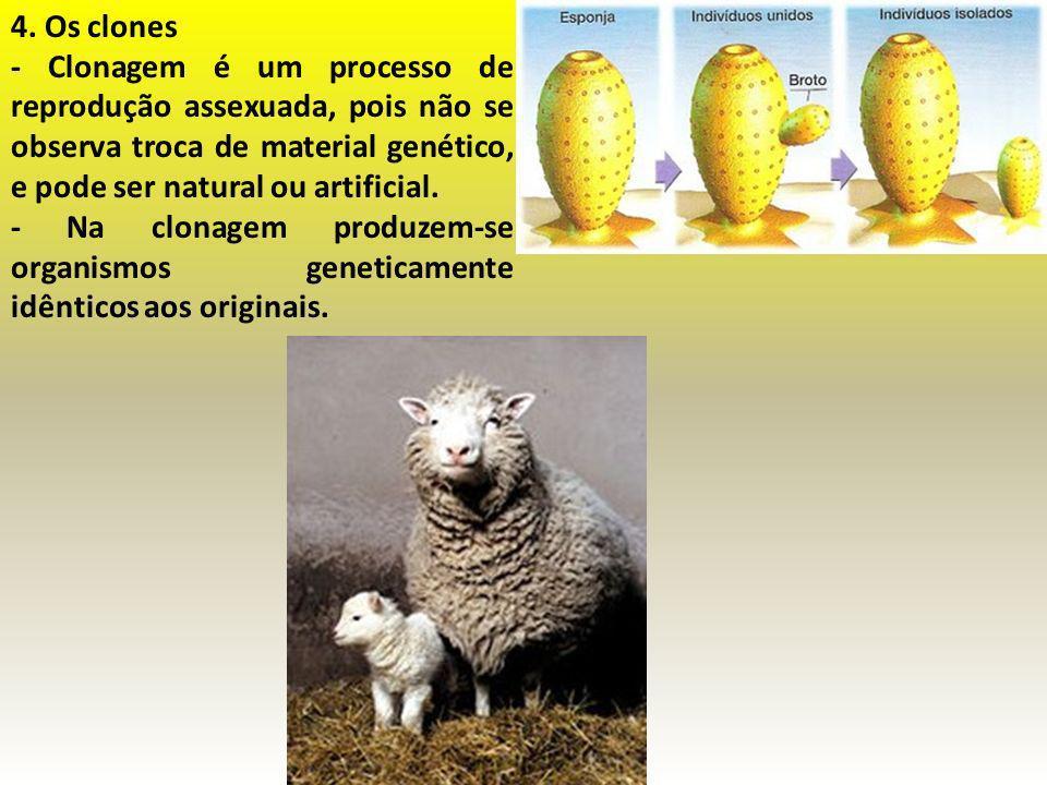 4. Os clones - Clonagem é um processo de reprodução assexuada, pois não se observa troca de material genético, e pode ser natural ou artificial. - Na