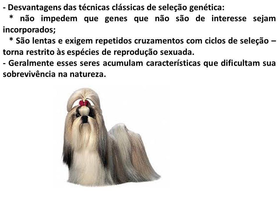 - Desvantagens das técnicas clássicas de seleção genética: * não impedem que genes que não são de interesse sejam incorporados; * São lentas e exigem