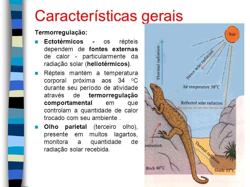 Características gerais Termorregulação: Ectotérmicos - os répteis dependem de fontes externas de calor - particularmente da radiação solar (heliotérmi