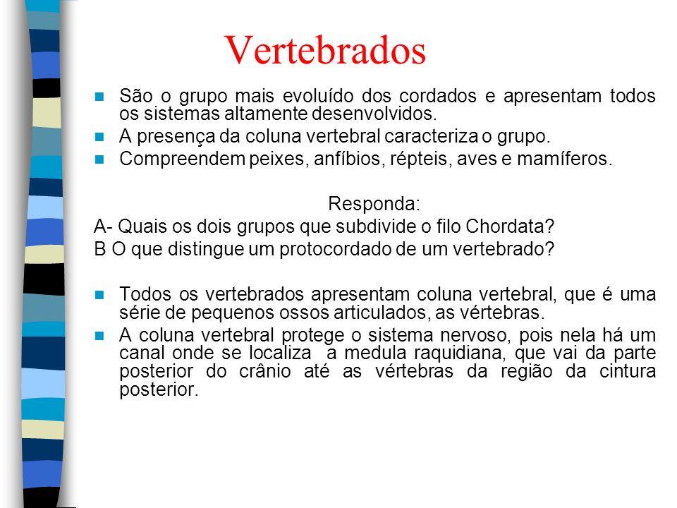 Vertebrados São o grupo mais evoluído dos cordados e apresentam todos os sistemas altamente desenvolvidos. A presença da coluna vertebral caracteriza