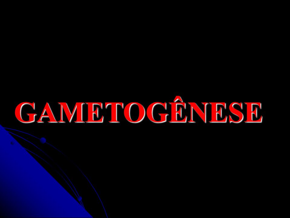 GAMETOGÊNESE GAMETOGÊNESE