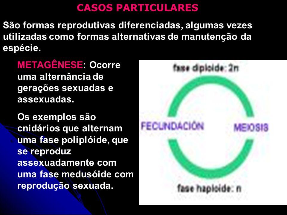 CASOS PARTICULARES São formas reprodutivas diferenciadas, algumas vezes utilizadas como formas alternativas de manutenção da espécie. METAGÊNESE: Ocor