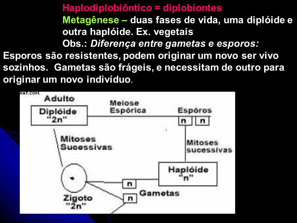 Haplodiplobiôntico = diplobiontes Metagênese – duas fases de vida, uma diplóide e outra haplóide. Ex. vegetais Obs.: Diferença entre gametas e esporos