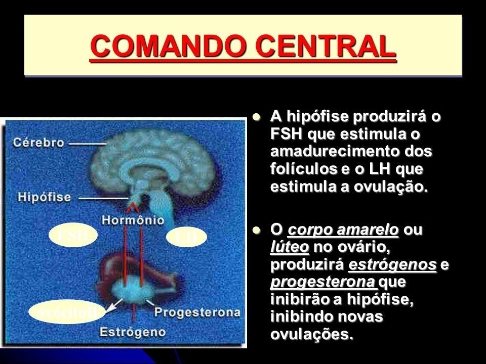 A hipófise produzirá o FSH que estimula o amadurecimento dos folículos e o LH que estimula a ovulação. A hipófise produzirá o FSH que estimula o amadu