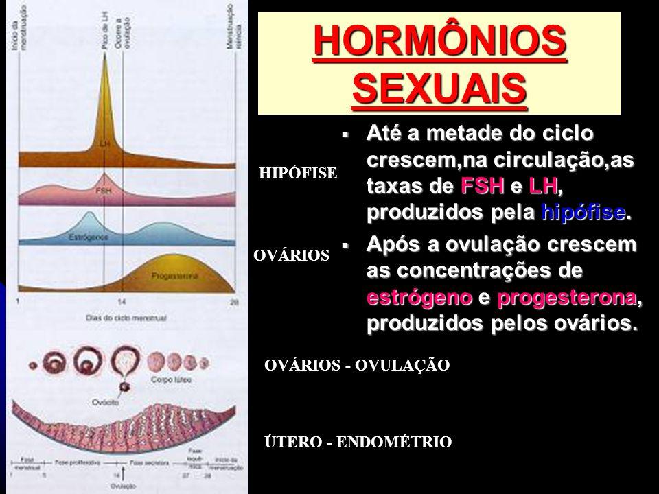 HORMÔNIOS SEXUAIS Até a metade do ciclo crescem,na circulação,as taxas de FSH e LH, produzidos pela hipófise. Até a metade do ciclo crescem,na circula