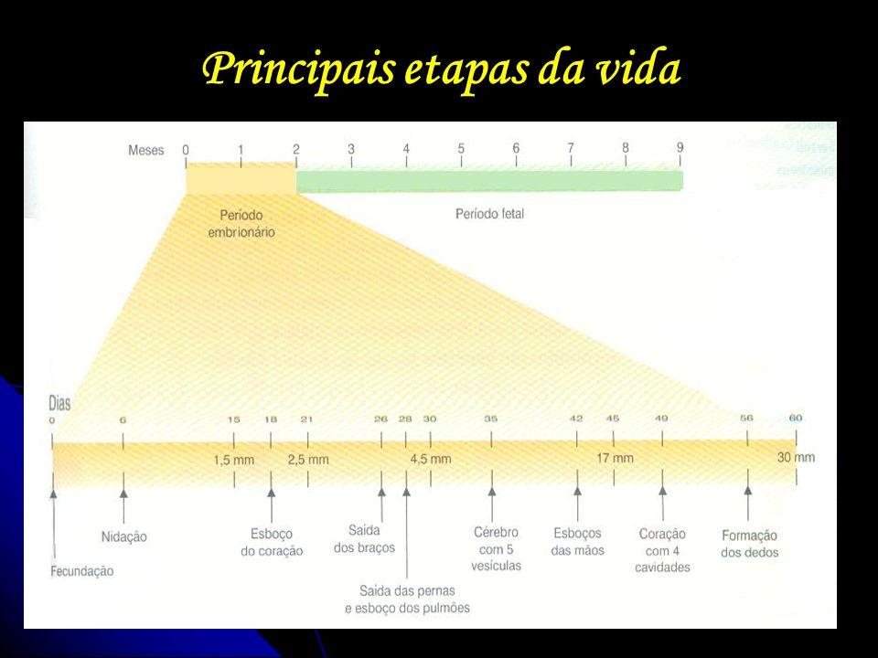 Principais etapas da vida