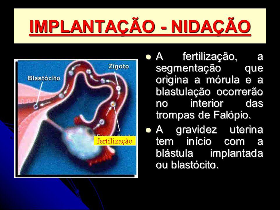 IMPLANTAÇÃO - NIDAÇÃO A fertilização, a segmentação que origina a mórula e a blastulação ocorrerão no interior das trompas de Falópio. A fertilização,