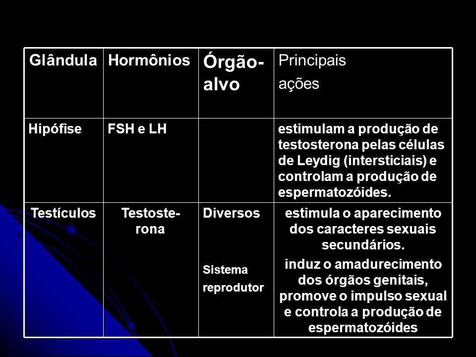 HORMÔNIOS SEXUAIS MASCULINOS estimula o aparecimento dos caracteres sexuais secundários. induz o amadurecimento dos órgãos genitais, promove o impulso