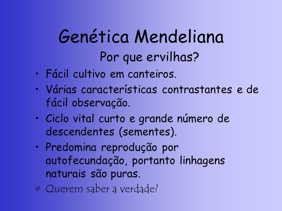 Genética Mendeliana Por que ervilhas? Fácil cultivo em canteiros. Várias características contrastantes e de fácil observação. Ciclo vital curto e gran