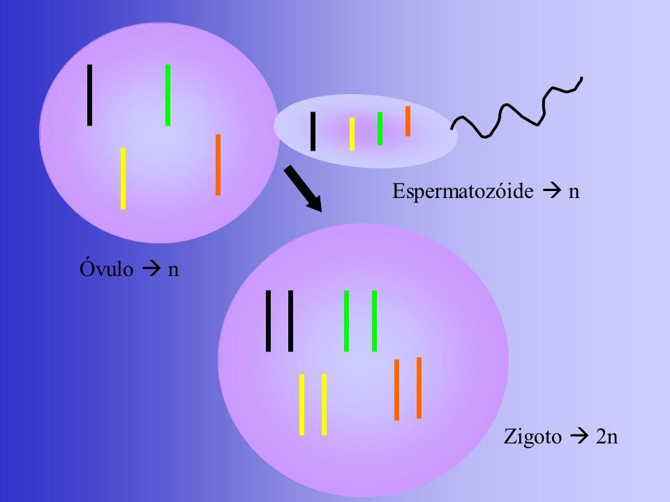 Genes Letais Provocam a morte ou não desenvolvimento do embrião.