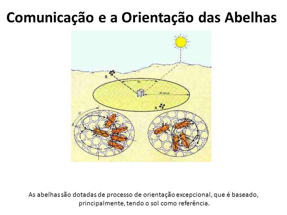 Comunicação e a Orientação das Abelhas As abelhas são dotadas de processo de orientação excepcional, que é baseado, principalmente, tendo o sol como r