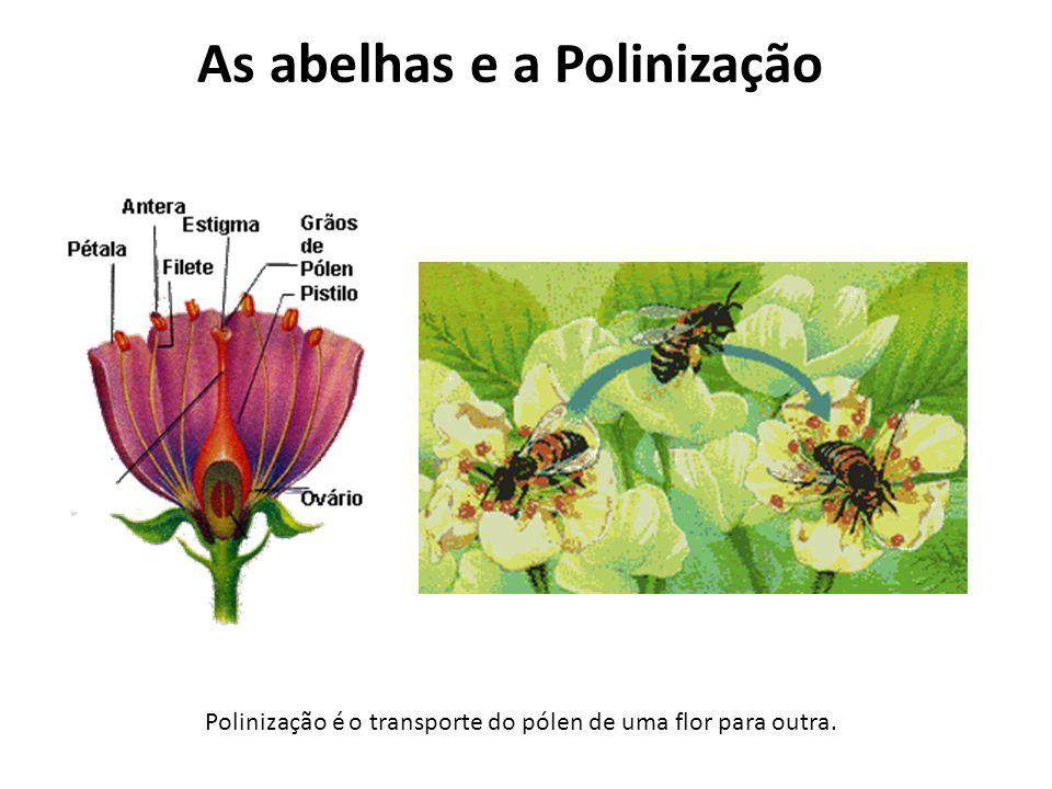 As abelhas e a Polinização Polinização é o transporte do pólen de uma flor para outra.