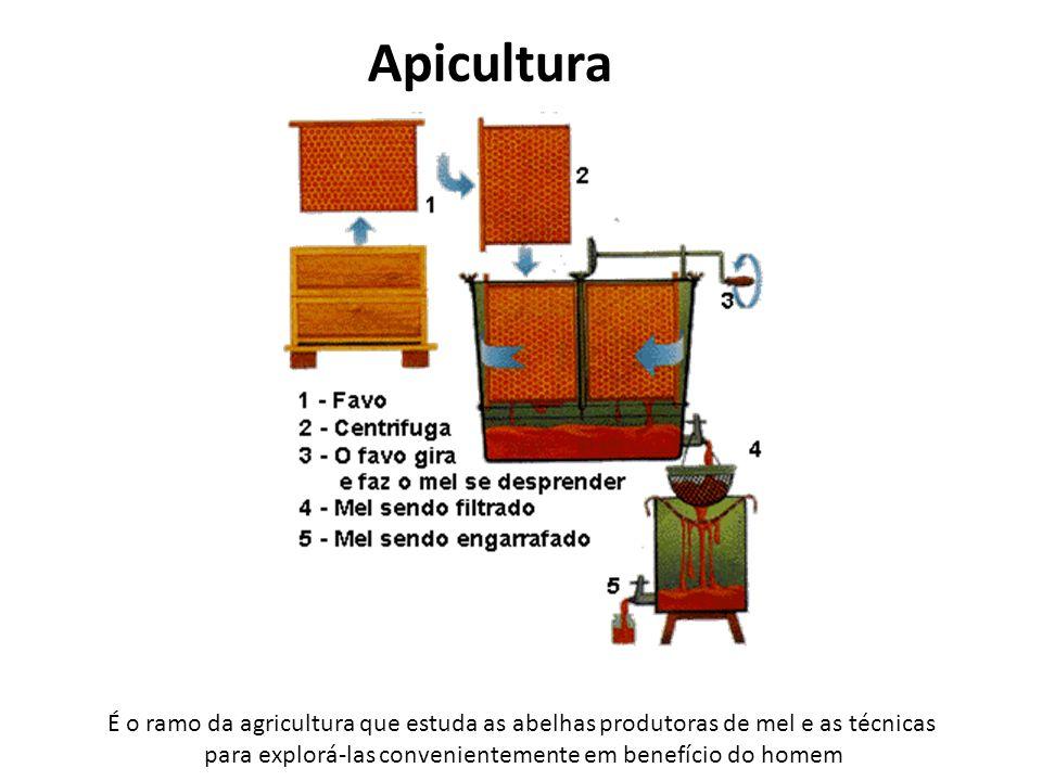 Apicultura É o ramo da agricultura que estuda as abelhas produtoras de mel e as técnicas para explorá-las convenientemente em benefício do homem