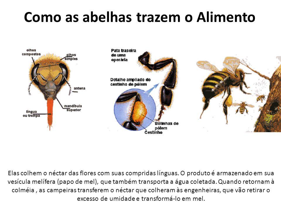 Como as abelhas trazem o Alimento Elas colhem o néctar das flores com suas compridas línguas. O produto é armazenado em sua vesícula melífera (papo de
