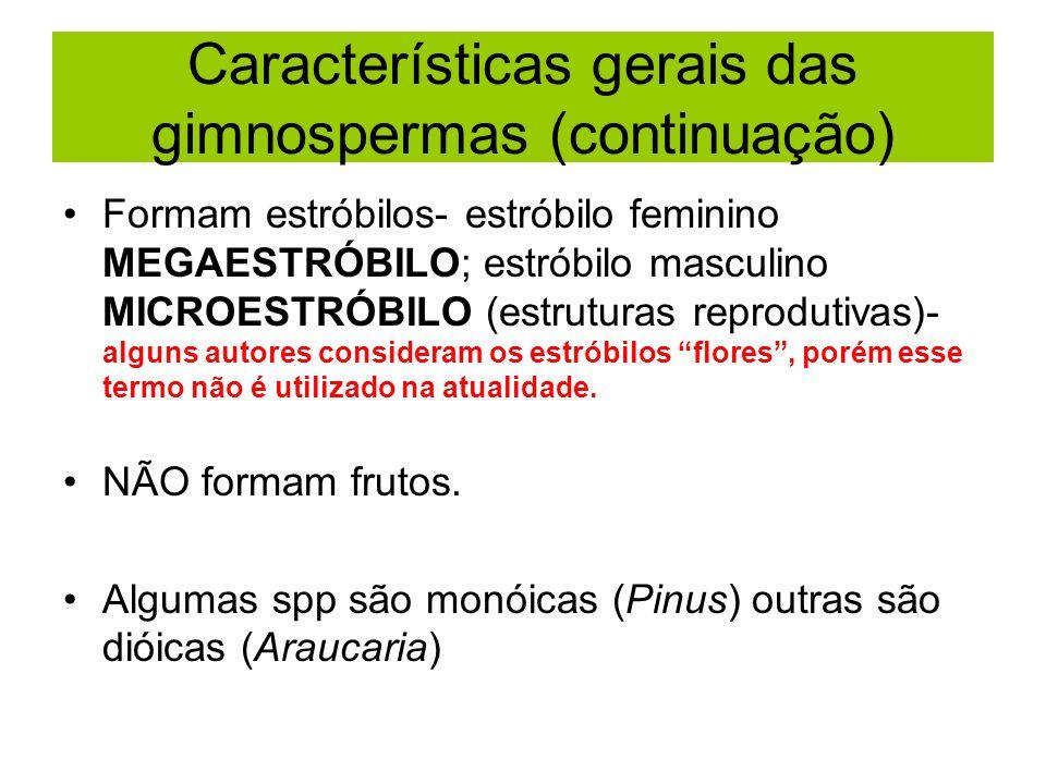 Características gerais das gimnospermas (continuação) Formam estróbilos- estróbilo feminino MEGAESTRÓBILO; estróbilo masculino MICROESTRÓBILO (estruturas reprodutivas)- alguns autores consideram os estróbilos flores, porém esse termo não é utilizado na atualidade.