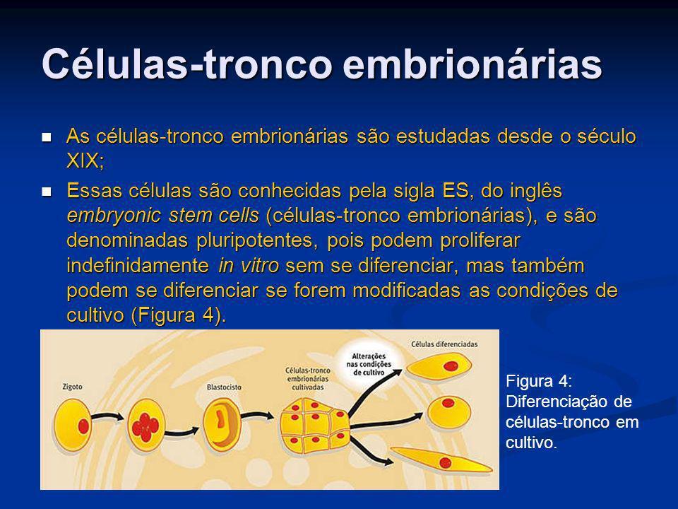 Células-tronco embrionárias As células-tronco embrionárias são estudadas desde o século XIX; As células-tronco embrionárias são estudadas desde o sécu