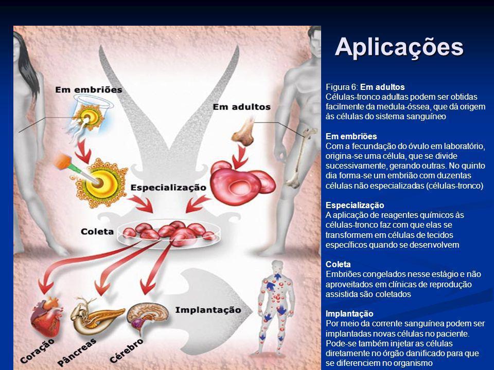 Aplicações Figura 6: Em adultos Células-tronco adultas podem ser obtidas facilmente da medula-óssea, que dá origem às células do sistema sanguíneo Em
