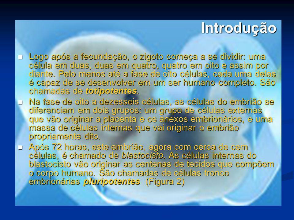 Aplicações Doenças Cardiovasculares (enfarte no miocárdio) Tratamento: células-tronco retiradas da medula óssea do paciente são implantadas no músculo cardíaco Tratamento: células-tronco retiradas da medula óssea do paciente são implantadas no músculo cardíaco Resultado: há uma regeneração do músculo e criação de novos vasos sangüíneos, aumentando a irrigação Resultado: há uma regeneração do músculo e criação de novos vasos sangüíneos, aumentando a irrigação Andamento: o Brasil é um dos países mais avançados no mundo na área.