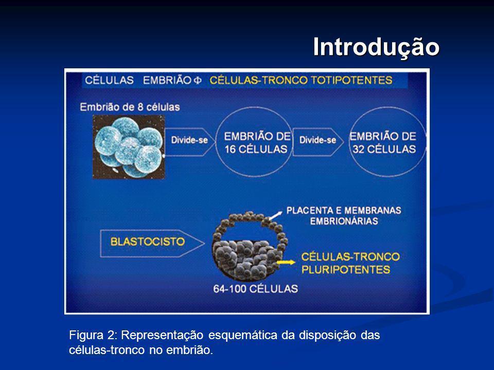 História A incrível capacidade de gerar um organismo adulto completo a partir de apenas uma célula tem fascinado os biólogos desde que o fisiologista alemão Theodor Schwann (1810-1882) lançou, em 1839, as bases da teoria celular.