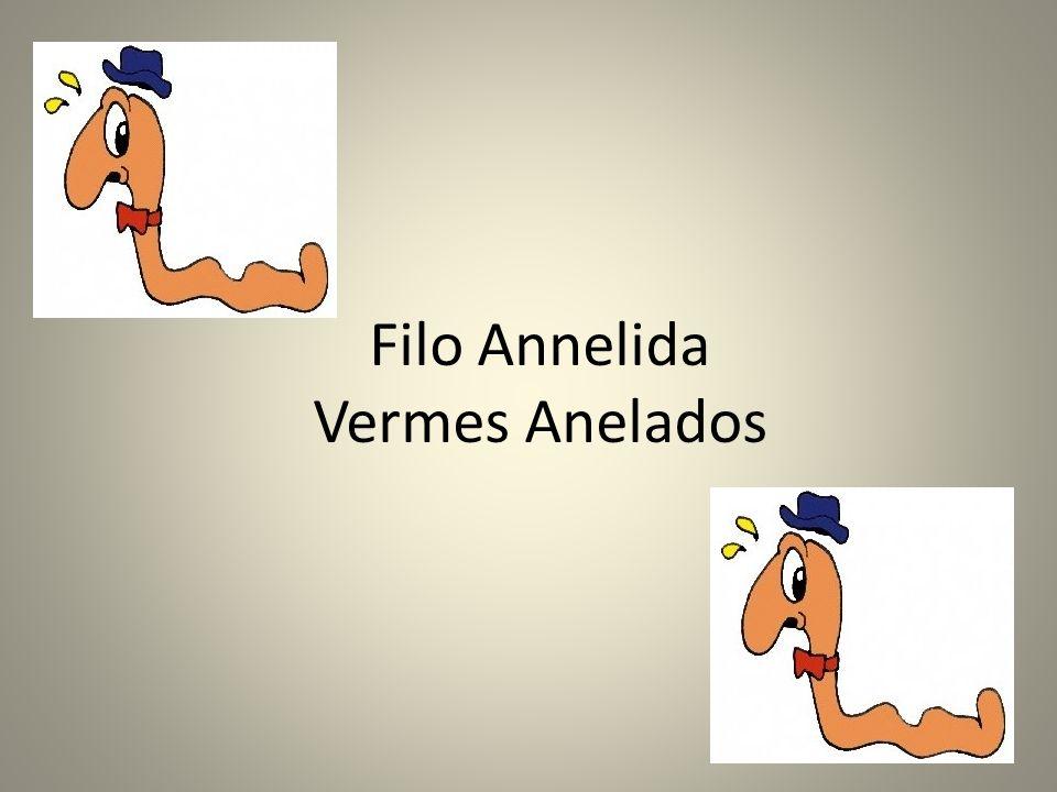 Filo Annelida Vermes Anelados
