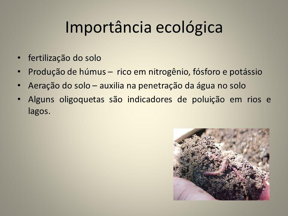 Importância ecológica fertilização do solo Produção de húmus – rico em nitrogênio, fósforo e potássio Aeração do solo – auxilia na penetração da água