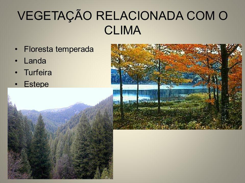 VEGETAÇÃO RELACIONADA COM O CLIMA Floresta temperada Landa Turfeira Estepe