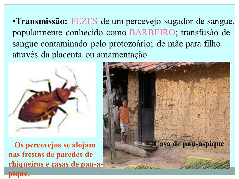 Transmissão: FEZES de um percevejo sugador de sangue, popularmente conhecido como BARBEIRO; transfusão de sangue contaminado pelo protozoário; de mãe