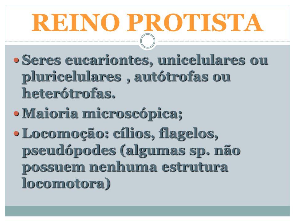 REINO PROTISTA características gerais REINO PROTISTA Seres eucariontes, unicelulares ou pluricelulares, autótrofas ou heterótrofas. Seres eucariontes,