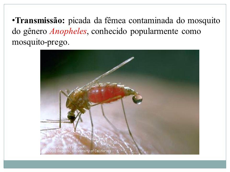 Transmissão: picada da fêmea contaminada do mosquito do gênero Anopheles, conhecido popularmente como mosquito-prego.