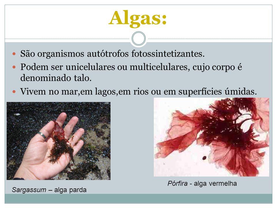 Algas: São organismos autótrofos fotossintetizantes. Podem ser unicelulares ou multicelulares, cujo corpo é denominado talo. Vivem no mar,em lagos,em