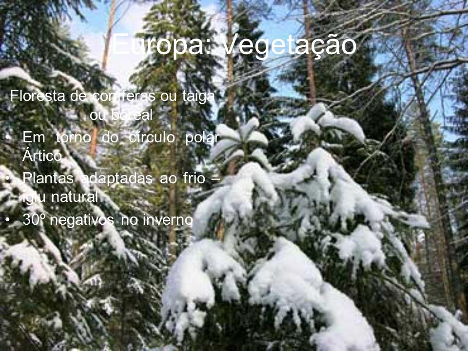 Europa: Vegetação Floresta de coníferas ou taiga ou boreal Em torno do círculo polar Ártico Plantas adaptadas ao frio – iglu natural 30º negativos no