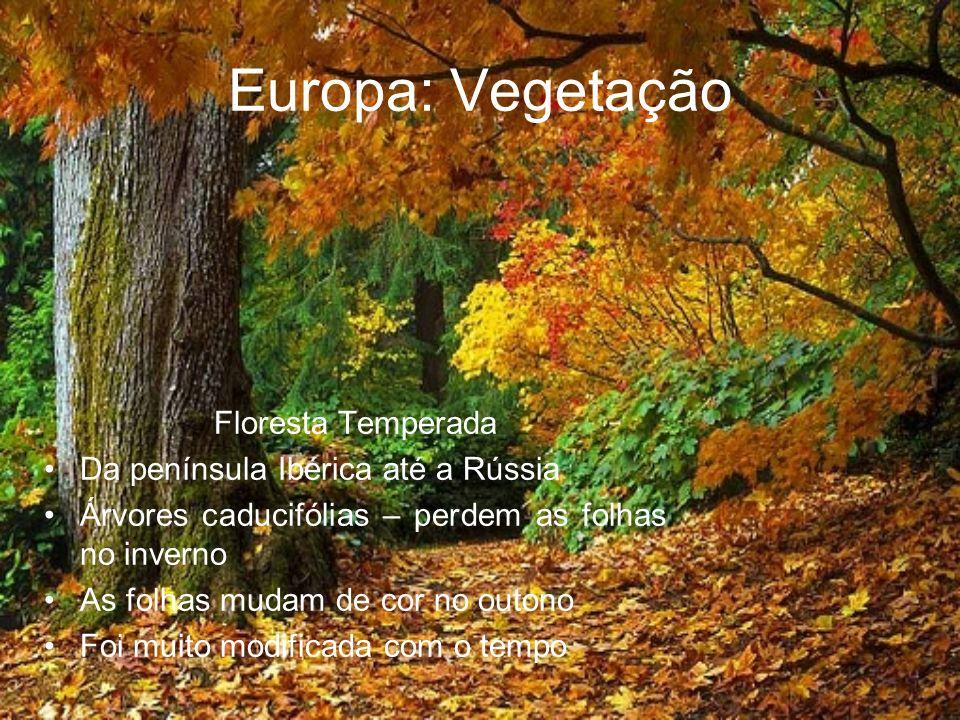 Europa: Vegetação Floresta Temperada Da península Ibérica até a Rússia Árvores caducifólias – perdem as folhas no inverno As folhas mudam de cor no ou