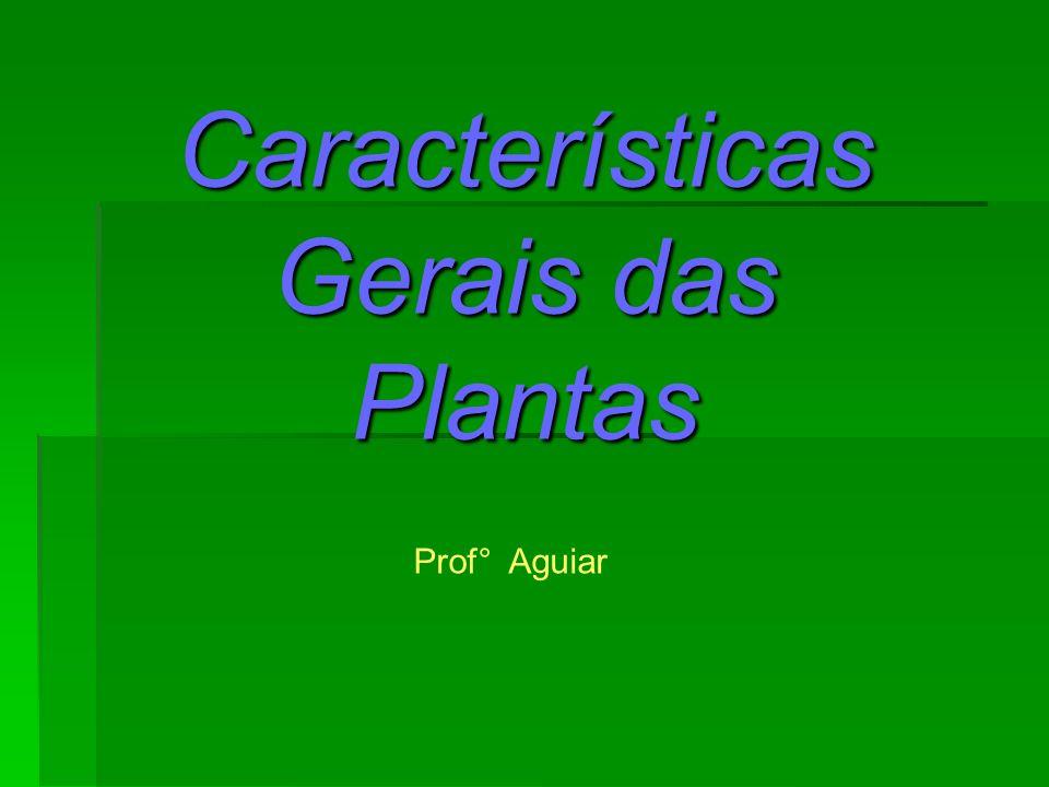 Características Gerais das Plantas Prof° Aguiar