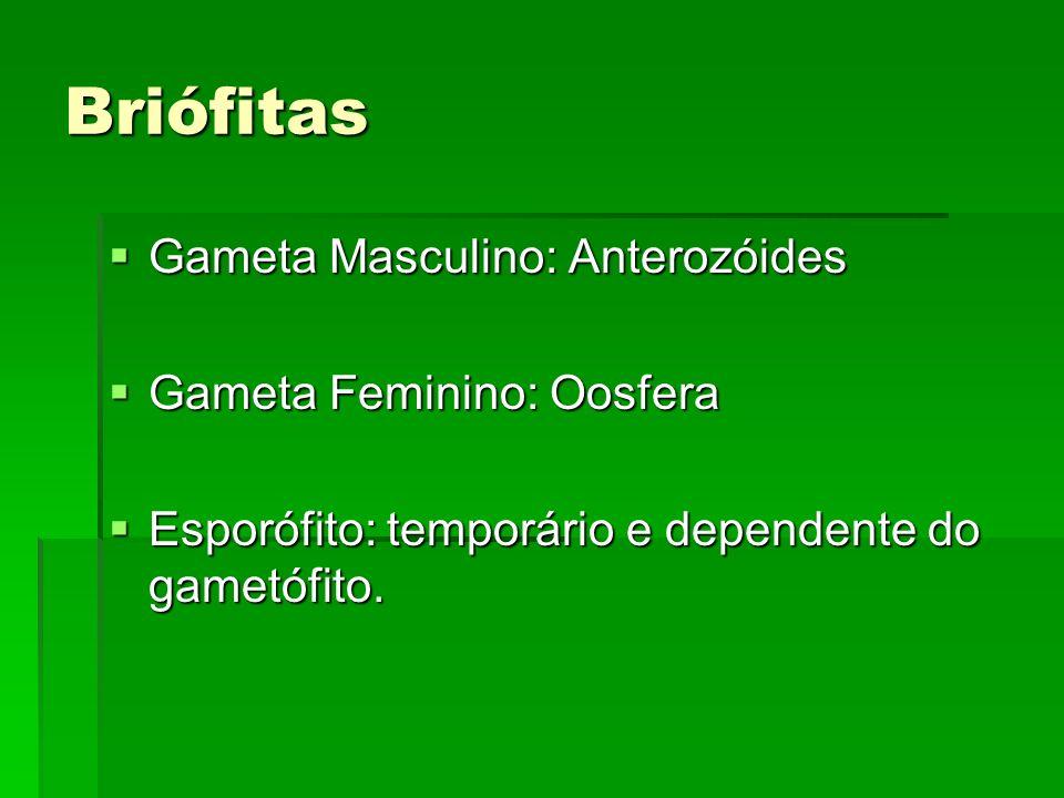 Briófitas Gameta Masculino: Anterozóides Gameta Masculino: Anterozóides Gameta Feminino: Oosfera Gameta Feminino: Oosfera Esporófito: temporário e dep