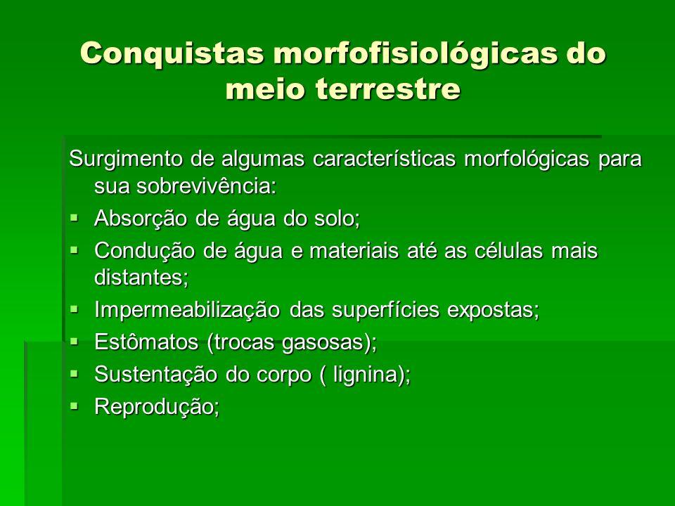 Conquistas morfofisiológicas do meio terrestre Surgimento de algumas características morfológicas para sua sobrevivência: Absorção de água do solo; Ab