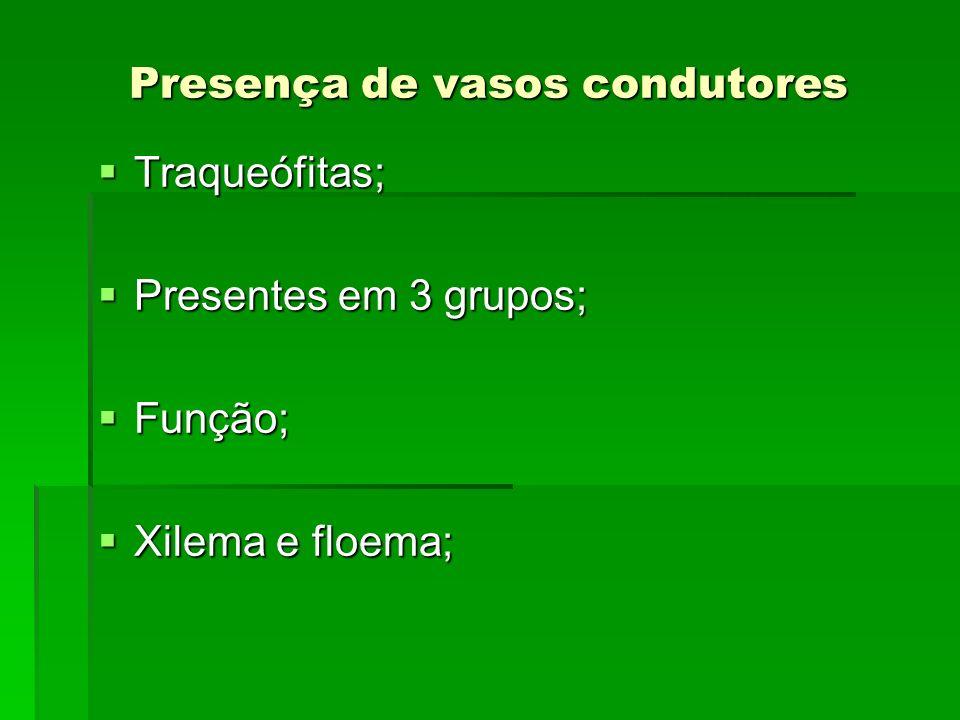Presença de vasos condutores Traqueófitas; Traqueófitas; Presentes em 3 grupos; Presentes em 3 grupos; Função; Função; Xilema e floema; Xilema e floem