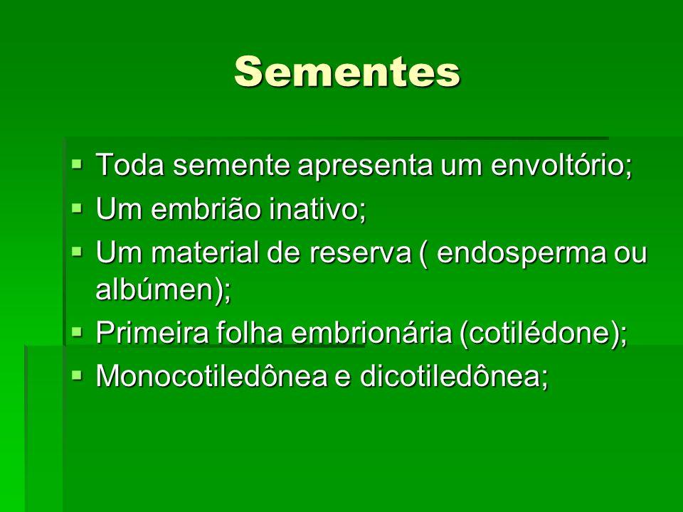 Sementes Toda semente apresenta um envoltório; Toda semente apresenta um envoltório; Um embrião inativo; Um embrião inativo; Um material de reserva (