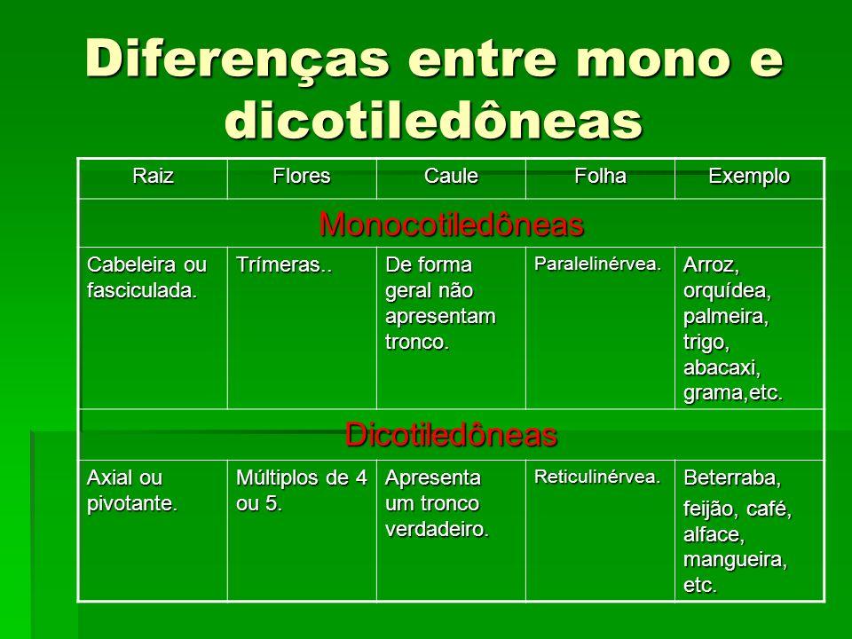 Diferenças entre mono e dicotiledôneas RaizFloresCauleFolhaExemplo Monocotiledôneas Cabeleira ou fasciculada. Trímeras.. De forma geral não apresentam