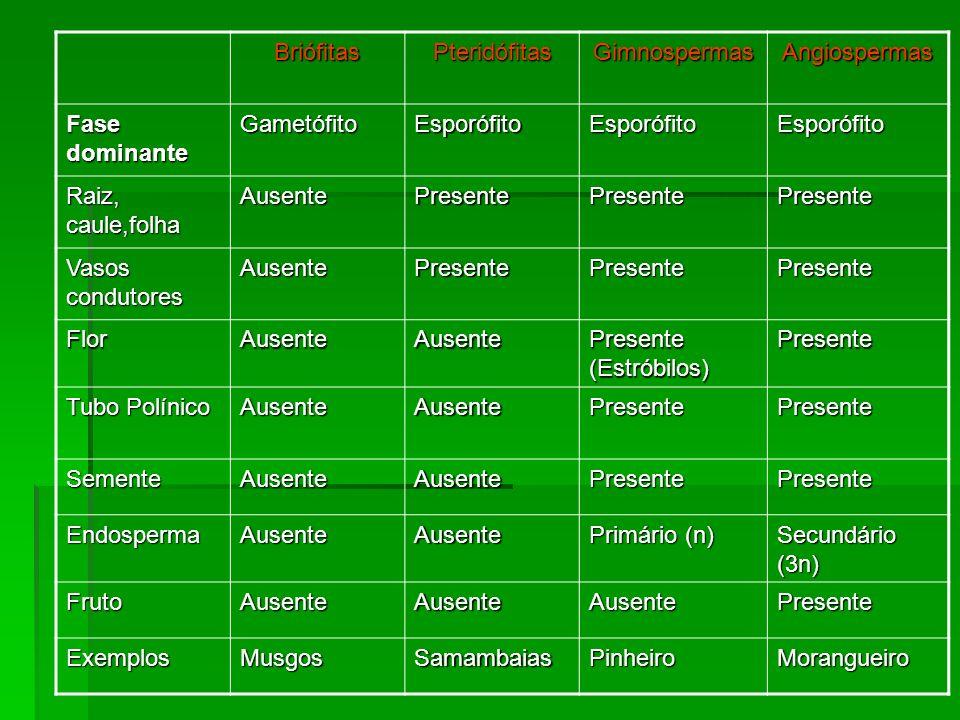 BriófitasPteridófitasGimnospermasAngiospermas Fase dominante GametófitoEsporófitoEsporófitoEsporófito Raiz, caule,folha AusentePresentePresentePresent