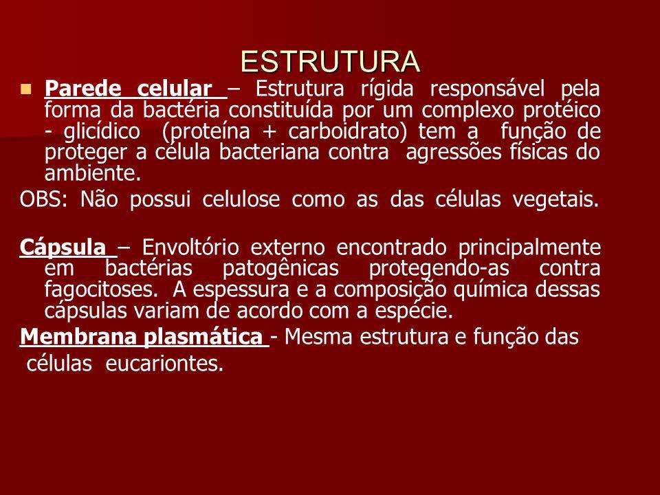 ESTRUTURA Parede celular – Estrutura rígida responsável pela forma da bactéria constituída por um complexo protéico - glicídico (proteína + carboidrato) tem a função de proteger a célula bacteriana contra agressões físicas do ambiente.