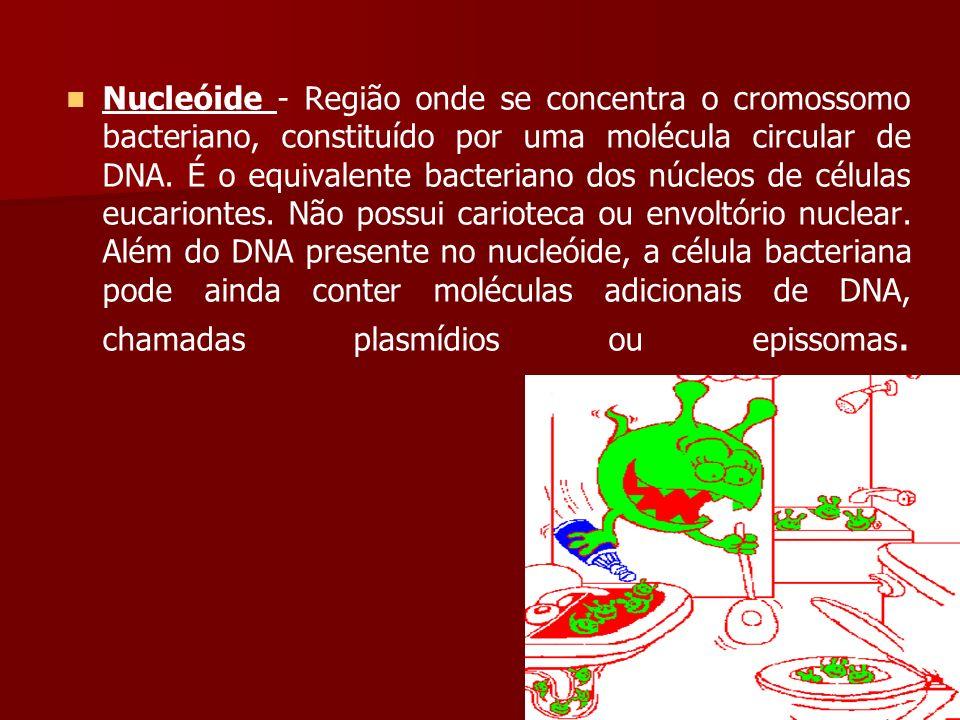 Nucleóide - Região onde se concentra o cromossomo bacteriano, constituído por uma molécula circular de DNA.