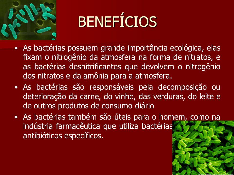 BENEFÍCIOS As bactérias possuem grande importância ecológica, elas fixam o nitrogênio da atmosfera na forma de nitratos, e as bactérias desnitrificantes que devolvem o nitrogênio dos nitratos e da amônia para a atmosfera.