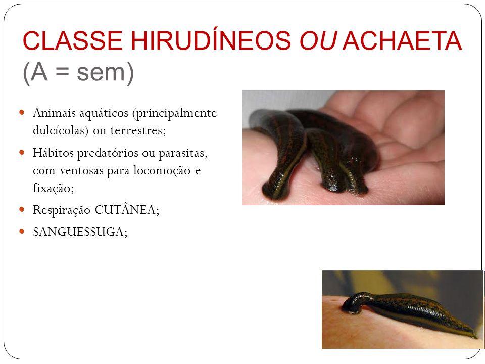 CLASSE HIRUDÍNEOS OU ACHAETA (A = sem) Animais aquáticos (principalmente dulcícolas) ou terrestres; Hábitos predatórios ou parasitas, com ventosas par