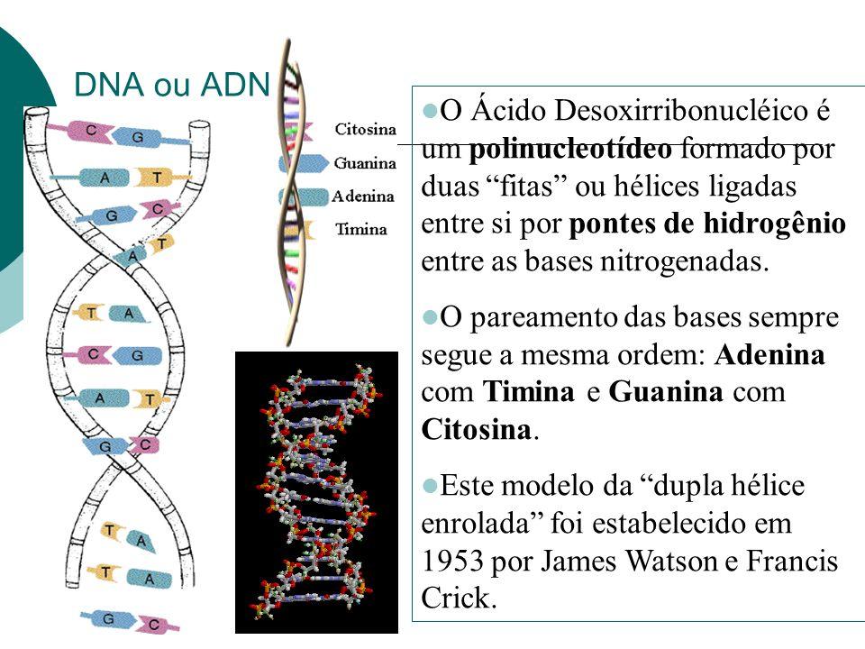 DNA ou ADN O Ácido Desoxirribonucléico é um polinucleotídeo formado por duas fitas ou hélices ligadas entre si por pontes de hidrogênio entre as bases