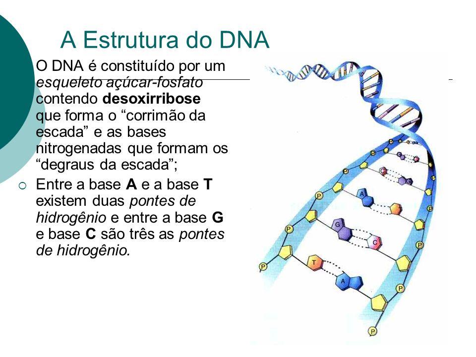 A Estrutura do DNA O DNA é constituído por um esqueleto açúcar-fosfato contendo desoxirribose que forma o corrimão da escada e as bases nitrogenadas q
